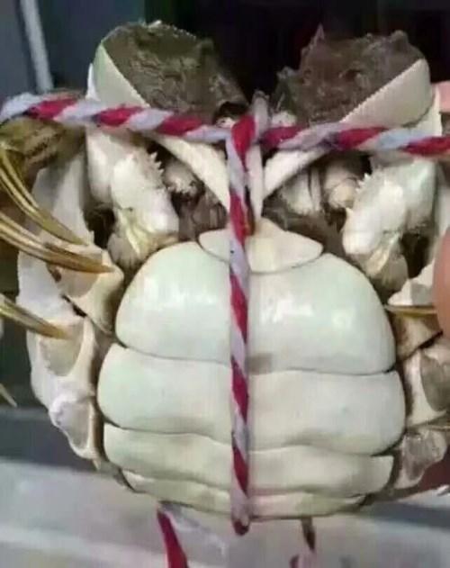 香辣螃蟹哪家好_兴化大闸蟹直营店_江苏绿生缘大闸蟹有限公司