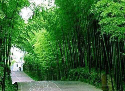 武汉周边游一日游_优排网站hxl036