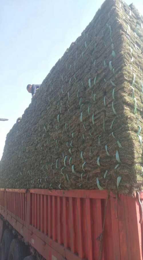口碑好的草坪批发多少钱一个平方_优质草坪价格-句容市后白镇绿叶青草坪种植基地