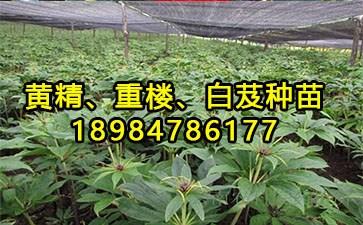 种植方法_16898网