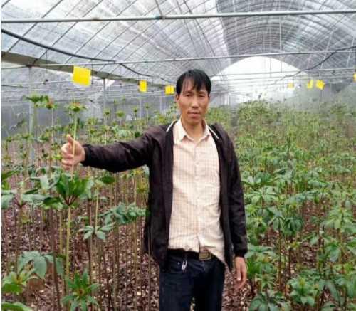 云南虎恩中药材种植有限公司