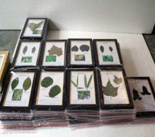 河南植物标本多少钱_河南标本模型