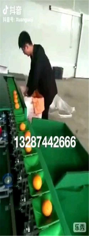 专业小型选果机多少钱_专业果蔬加工设备哪家便宜