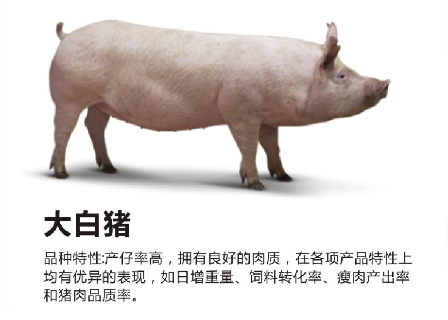 质量好的种猪销售_肥料加工设备相关-绵阳明兴农业科技开发有限公司