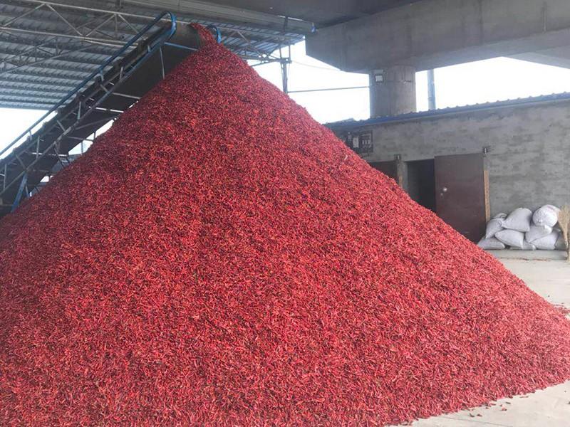 我们推荐山西质量好新一代辣椒地址_新一代辣椒价格相关-内黄县海涛尖椒种植专业合作社