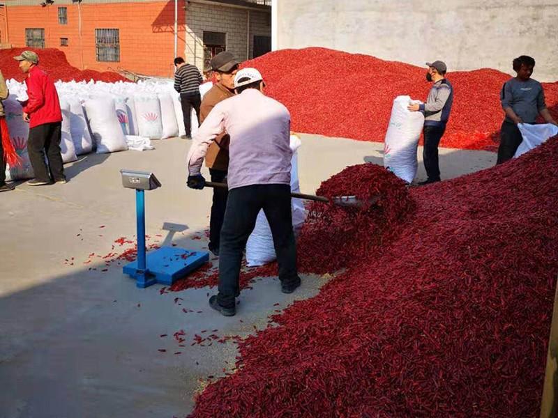 安徽知名新一代辣椒哪家便宜_高辣辣椒种植-内黄县海涛尖椒种植专业合作社