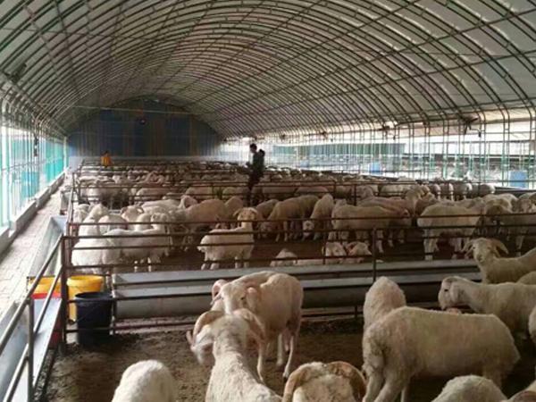 鹤壁优质养殖大棚销售_无支柱大棚骨架相关-安阳市诚信温室工程有限公司