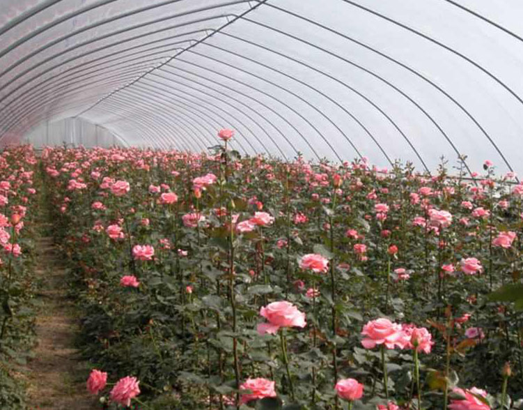 郑州玻璃花卉大棚预算_优质温室、大棚-安阳市诚信温室工程有限公司