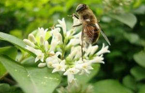 正规椴树蜂蜜原料厂家_知名的椴树蜂蜜原料相关-武汉市华明达蜂业有限公司