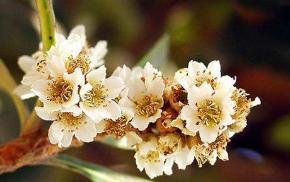 广西正宗琵琶蜂蜜原料制造商_质量好的琵琶蜂蜜原料   相关-武汉市华明达蜂业有限公司