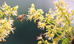 正规龙眼蜂蜜原料制造商_哪里有蜜制品-武汉市华明达蜂业有限公司