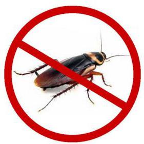 厨房灭蟑螂服务_上海上门商务服务-上海喆芈虫害防治服务有限公司