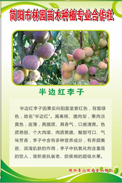 四川李子苗_青脆花卉种子、种苗种植-简阳市林园苗木种植专业合作社