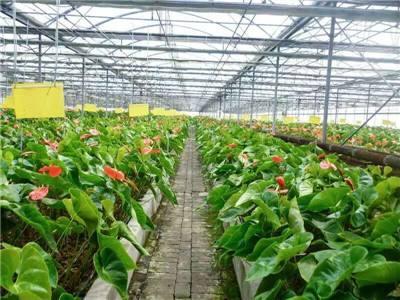 钢结构温室大棚厂_蔬菜温室大棚相关-长沙市绿地棚业有限公司