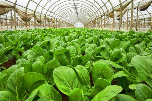 草莓育苗大棚公司_智能温室、大棚价格-长沙市绿地棚业有限公司