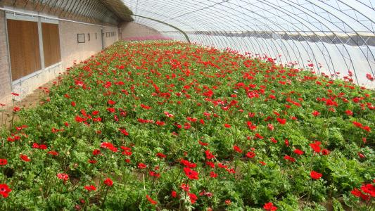 小型花卉大棚公司_原装温室、大棚-长沙市绿地棚业有限公司