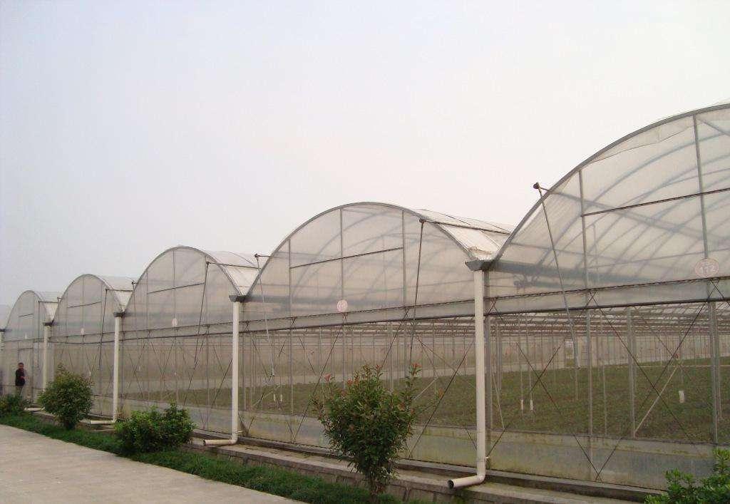 长沙连栋大棚_进口温室、大棚-长沙市绿地棚业有限公司