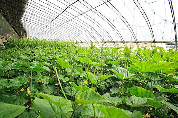 两层蔬菜大棚_钢结构蔬菜大棚相关-长沙市绿地棚业有限公司