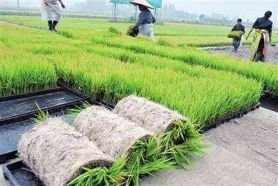 水稻秧盘机价格_专业植保机械定制-湖南双环纤维成型设备有限公司