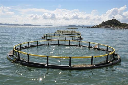 高品质网箱养殖网_ 网箱相关-沅江市福利渔网加工厂