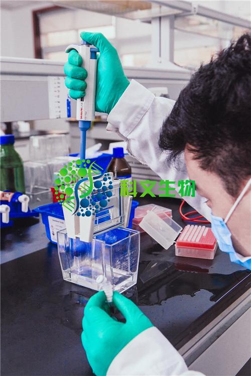 基因组dna小量抽提试剂盒_正规其他生物制品销售-长沙科文生物科技有限公司