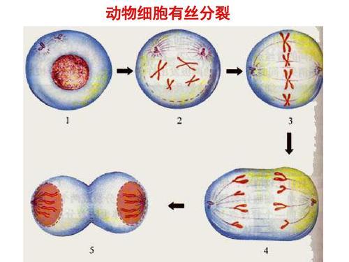 我们推荐cfse检测细胞增殖_细胞增殖技术哪家好相关-长沙科文生物科技有限公司