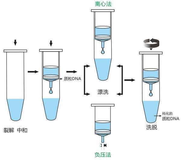 shrna质粒载体构建-长沙科文生物科技有限公司