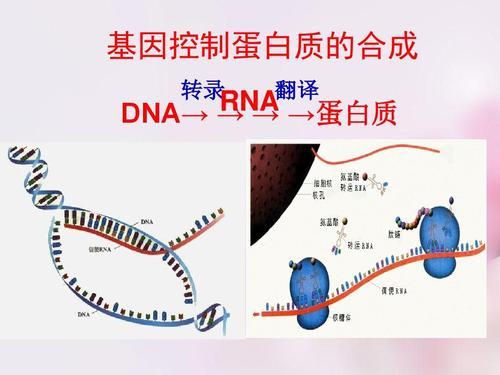基因合成价格_基因合成日期相关-长沙科文生物科技有限公司
