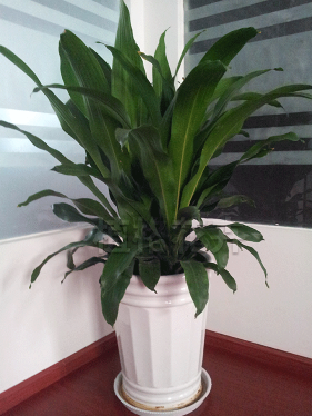 办公室花卉租赁咨询电话_云南租赁、典当-昆明植格花卉有限公司