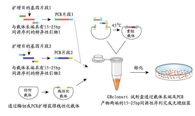 我们推荐基因组合成_专业基因合成报价相关-长沙科文生物科技有限公司