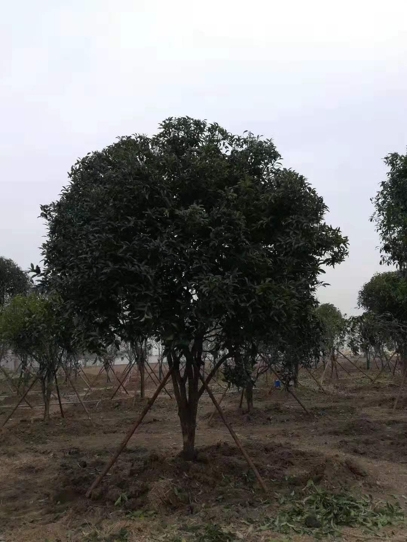 绿化草皮价格_草坪-新乡市华菱园林有限公司
