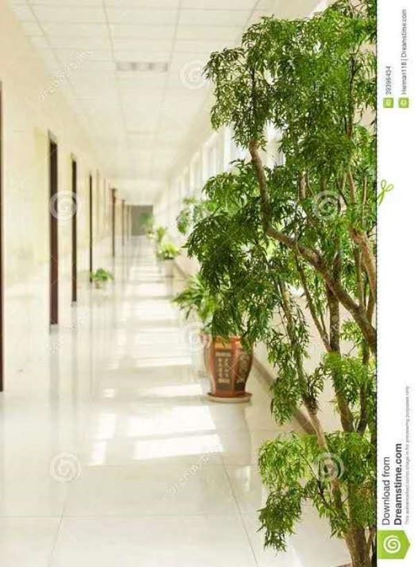 滑县二年生绿植租赁种类_户外树木盆景-安阳紫艺花卉有限公司