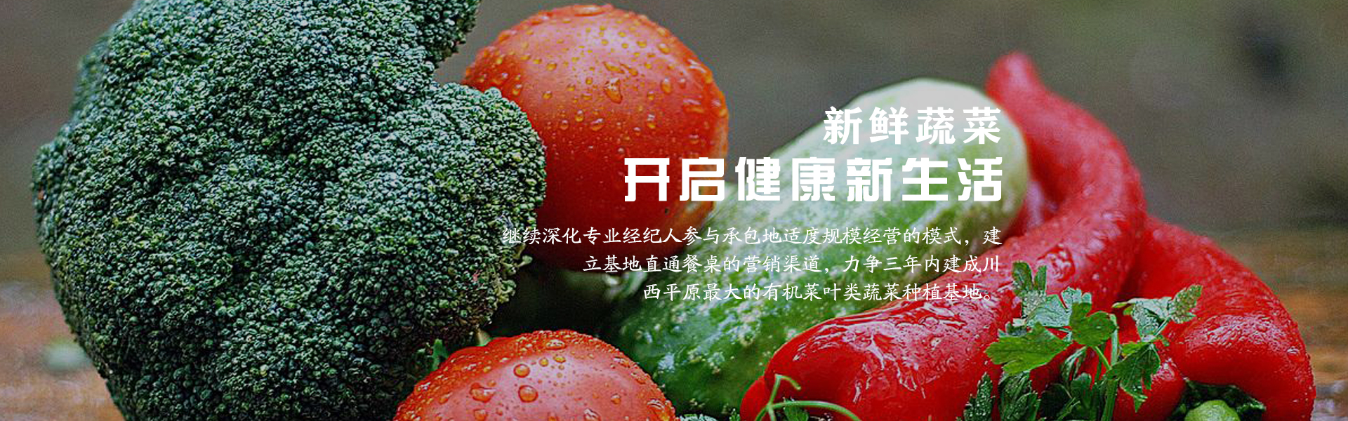自贡新鲜蔬菜_绿色健康购买-成都市录超农业有限责任公司
