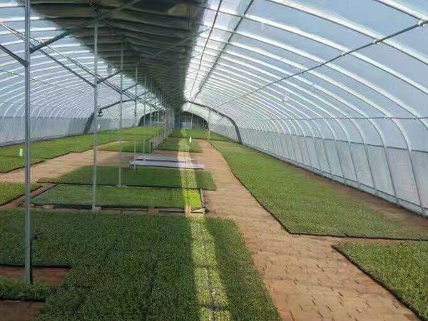 湖南蔬菜大棚施工定制_温室、大棚哪家好-安阳诚信温室工程有限公司