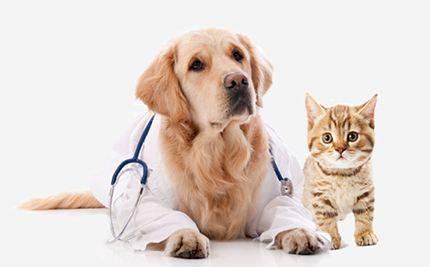正规宠物医院哪里好_宠物清洁美容用品相关-鹤城区缔康宠物医院