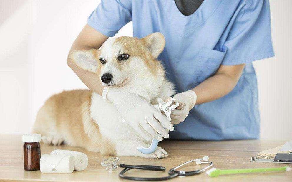 宠物医疗机构_宠物牵引带相关-鹤城区缔康宠物医院