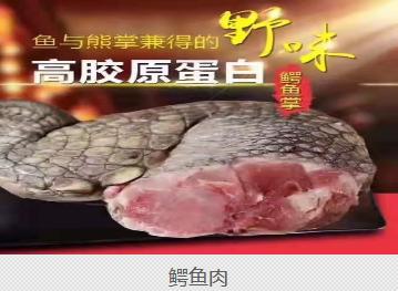 正宗鳄鱼厂家_专业特种养殖动物养殖-天长市京哈龟鳄饲养场