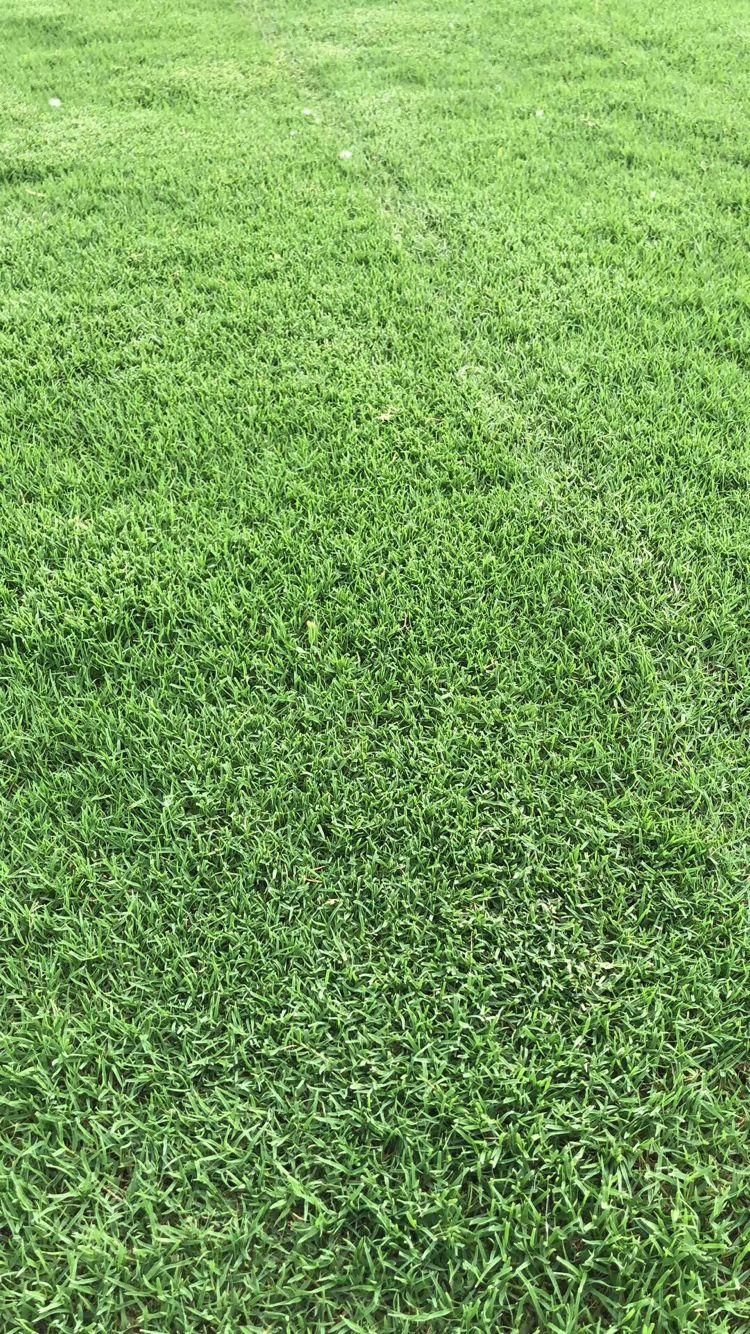 三明温州四季青草坪销售电话_苏州草坪-句容市后白镇绿叶青草坪种植基地