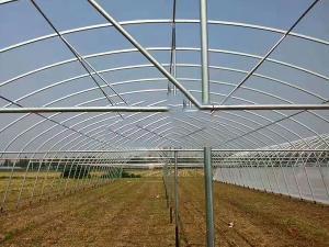 温室大棚供应商_阳光板温室大棚相关-安阳市阳光温室工程有限公司