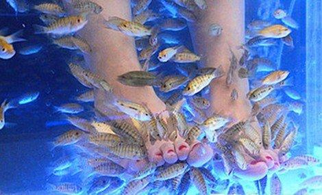 风情鱼疗馆加盟_进口娱乐休闲项目合作供应商-韶山市众诚设备销售有限公司