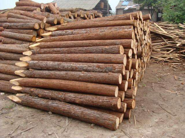 6米松木桩供应商_口碑好的建筑项目合作工程-长沙盼森建材有限公司