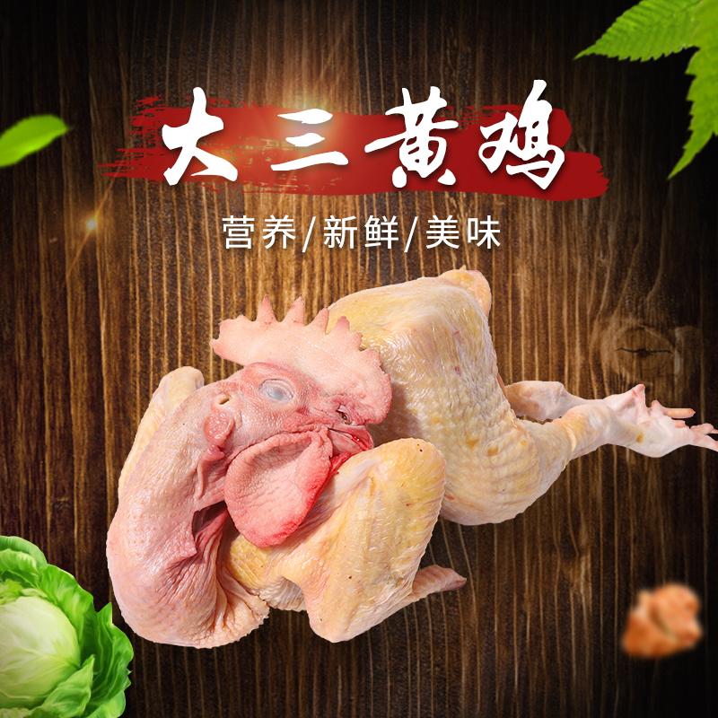 三大黄鸡加工_鸡销售-成都诚明农副产品有限公司