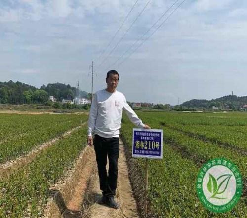 贵州一年生裸根苗批发_一年生农作物种子-攸县兴林油茶育苗专业合作社
