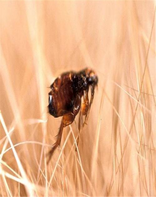 知名灭蚂蚁公司_灭蚂蚁推荐相关-山东龙信有害生物防治有限公司
