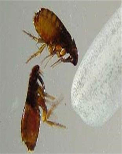 知名灭苍蝇推荐_上门环保哪家好-山东龙信有害生物防治有限公司