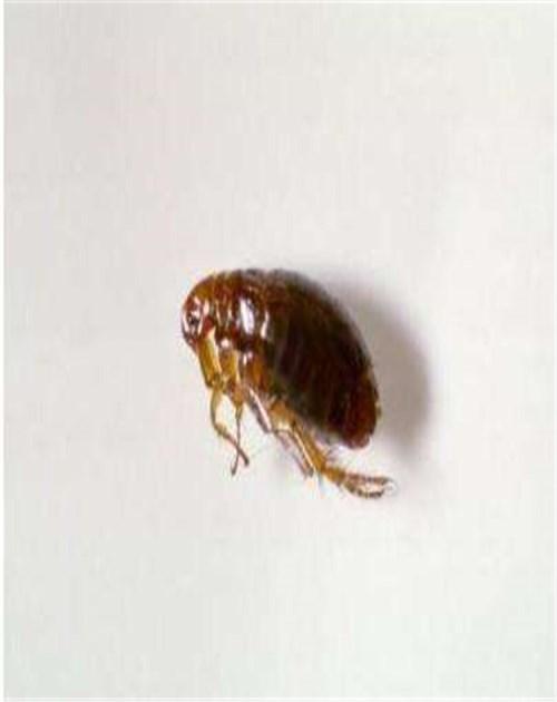 专业灭蚂蚁费用_上门环保解决方案-山东龙信有害生物防治有限公司