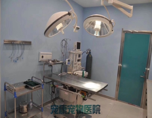 洛陽專業寵物醫院哪家好_寵物醫院用品相關-洛陽市高新開發區寵康寵物醫院