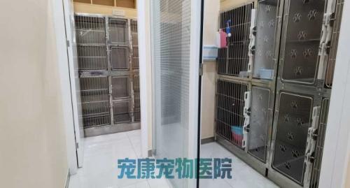 洛陽正規寵物眼病??齐娫抇寵物眼病??颇膫€好-洛陽市高新開發區寵康寵物醫院