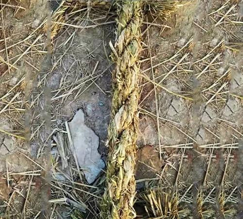 带、绳、线 绿化稻草绳把加工