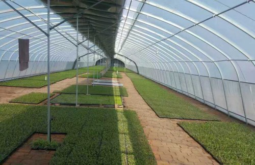 农业蔬菜大棚生产厂家 一亩地温室、大棚
